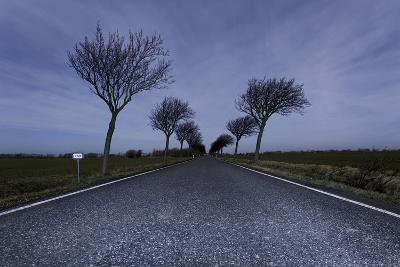 Highway, Crooked Trees at Full Moon by Night, Orth, Island Fehmarn, Schleswig Holstein, Germany-Axel Schmies-Photographic Print