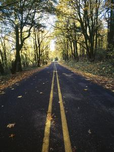 Highway Passing Through a Forest, Historic Columbia River Highway, Columbia River Gorge, Multnom...