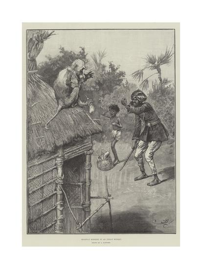 Highway Robbery by an Indian Monkey-Frederick Barnard-Giclee Print
