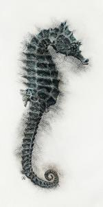 Seahorse I by Hilary Armstrong