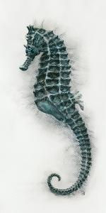Seahorse II by Hilary Armstrong