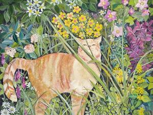 Cat and Long Grass, 1996 by Hilary Jones