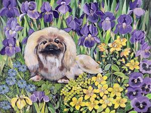 Peke in the Flower Bed by Hilary Jones