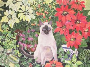 Poinsettias by Hilary Jones