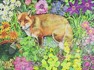 The Barnet Fox by Hilary Jones