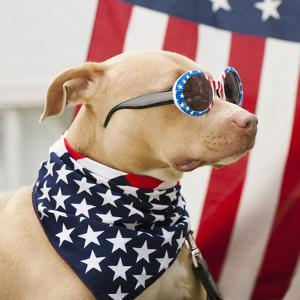 Dog Dressed in American Flag Neckerchief and Sunglasses by Hill Street Studios/Erik Isakson