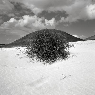 Hills Behind Cluster of Beach Grass--Photographic Print