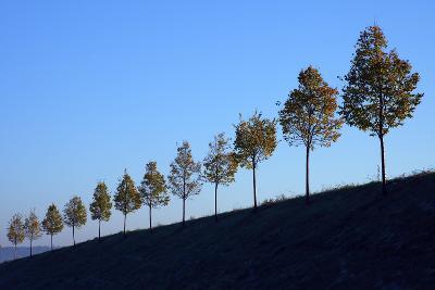 Hills, Tree Row, Autumn-Ronald Wittek-Photographic Print