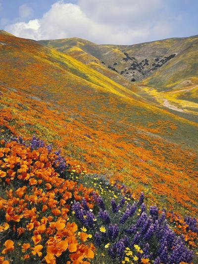 Hillside Wildflowers in Bloom-Craig Tuttle-Photographic Print