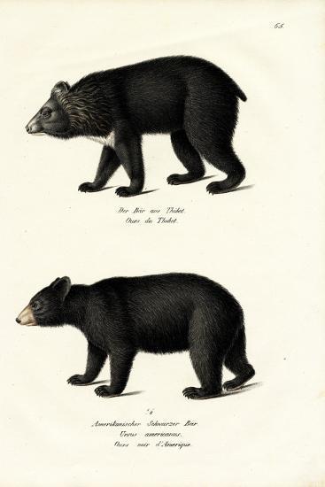 Himalayan Black Bear, 1824-Karl Joseph Brodtmann-Giclee Print