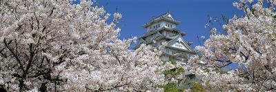 Himeji Castle Hyogo Japan--Photographic Print