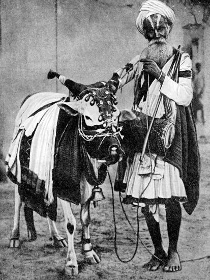 Hindu Cow with Sacred Cow, India, 1936--Giclee Print