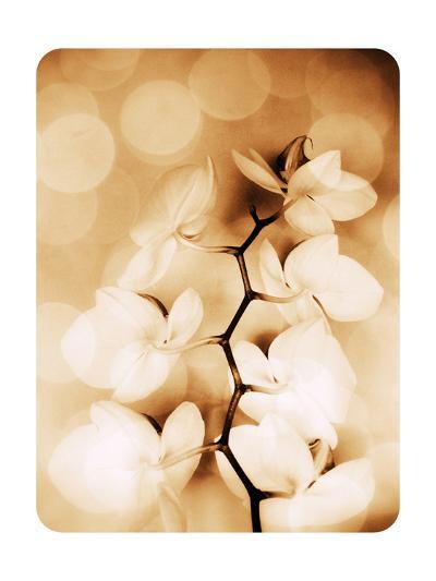 Hint Of Orchid II-Alaya Gadeh-Art Print