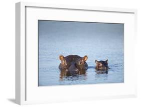 Hippo Cow and Calf, South Africa-Richard Du Toit-Framed Photographic Print