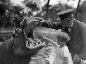 Hippo's Dental Check