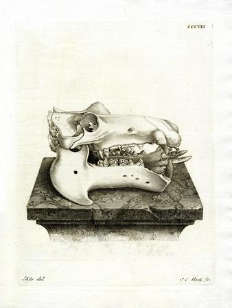 https://imgc.artprintimages.com/img/print/hippo-skull_u-l-pvrkw50.jpg?p=0