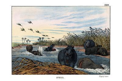 Hippopotamus, 1860--Giclee Print