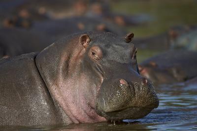 Hippopotamus (Hippopotamus Amphibius), Serengeti National Park, Tanzania, East Africa, Africa-James Hager-Photographic Print