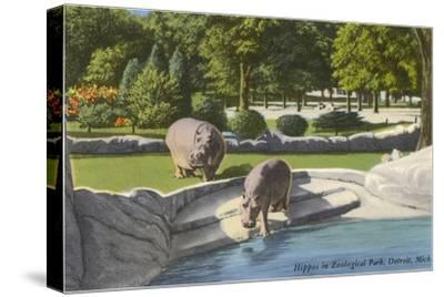 Hippopotamus in Zoo, Detroit, Michigan