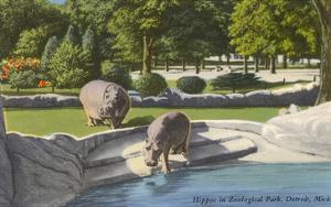 Hippopotamus in Zoo, Detroit, Michigan