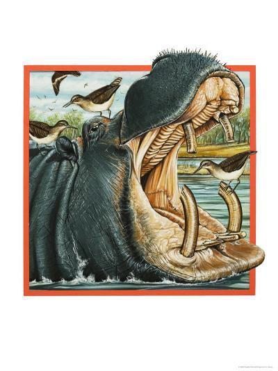 Hippopotamus--Giclee Print