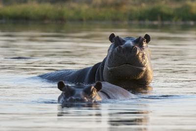 Hippopotamuses-Sergio Pitamitz-Photographic Print