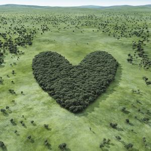 Forest Shaped Heart by Hiroshi Watanabe