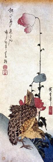Hiroshige: Poppies-Ando Hiroshige-Giclee Print