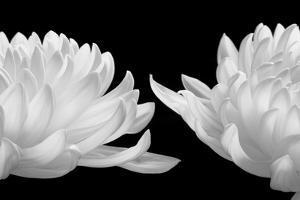 Talking Zen, 2006 by Hiroyuki Arakawa