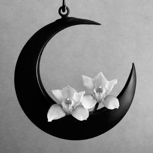 The Orchids Of The Moon, 2006 by Hiroyuki Arakawa