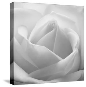 The White Maze, 2007 by Hiroyuki Arakawa
