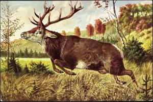 Hirsch, Springender Hirsch Am Wald, Tannenbäumchen
