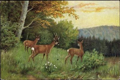 Hirsche, Junge Rehkitze Und Hirsche Am Waldesrand--Giclee Print