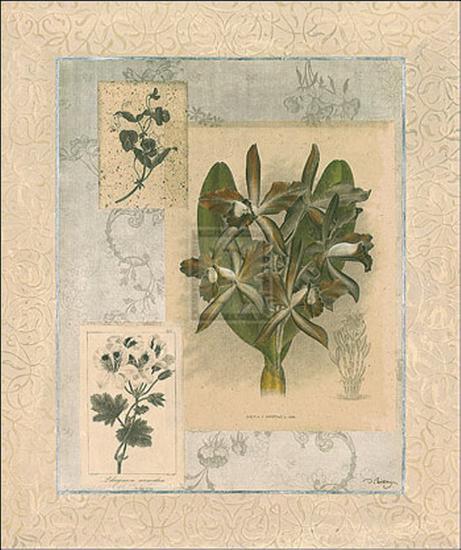 Histoire du Orchid VII-Dennis Carney-Art Print