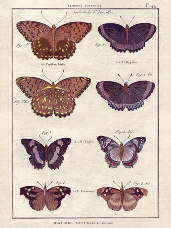 Histoire Naturelle 1-Terrence Wesley-Art Print