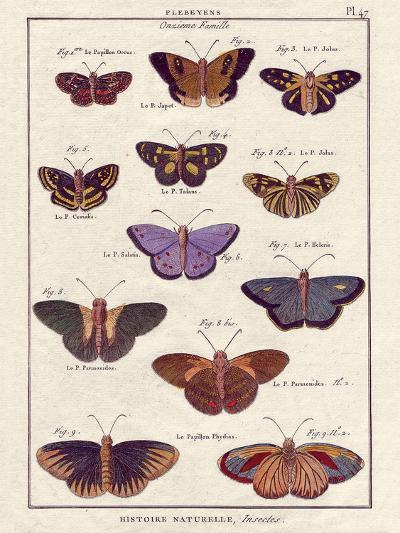 Histoire Naturelle 2-Terrence Wesley-Art Print