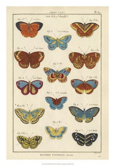 Histoire Naturelle Butterflies I-Unknown-Giclee Print