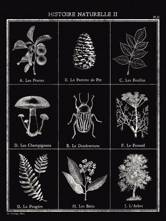 https://imgc.artprintimages.com/img/print/histoire-naturelle-ii_u-l-f907jt0.jpg?p=0