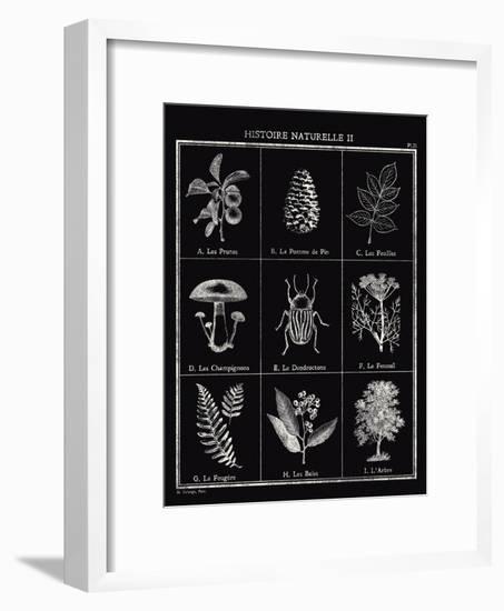Histoire Naturelle II-Maria Mendez-Framed Giclee Print