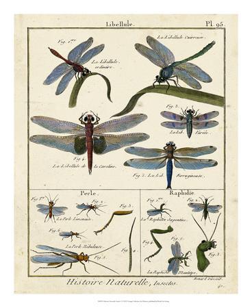 https://imgc.artprintimages.com/img/print/histoire-naturelle-insects-i_u-l-f8055k0.jpg?p=0