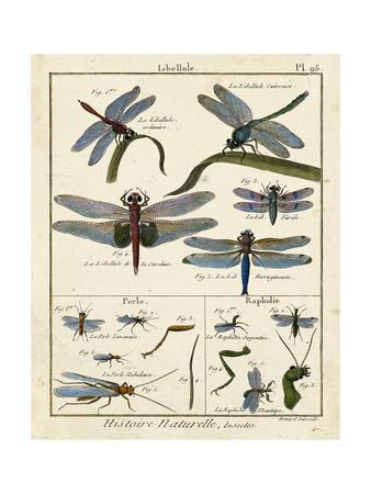 https://imgc.artprintimages.com/img/print/histoire-naturelle-insects-i_u-l-pwa3wf0.jpg?p=0