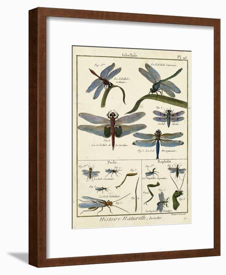 Histoire Naturelle Insects I-Diderot-Framed Art Print