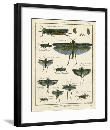 Histoire Naturelle Insects II-Diderot-Framed Giclee Print