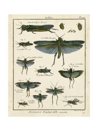 https://imgc.artprintimages.com/img/print/histoire-naturelle-insects-ii_u-l-pwa3wy0.jpg?p=0