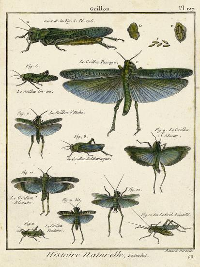 Histoire Naturelle Insects II-Diderot-Art Print