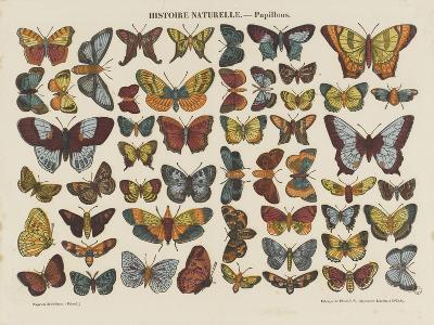 Histoire naturelle : papillons--Giclee Print