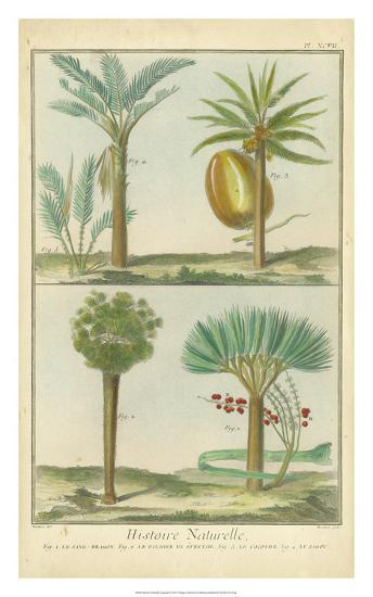 Histoire Naturelle Tropicals I-Martinet-Giclee Print