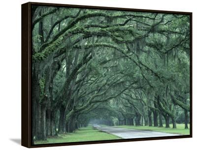 Historic Wormsloe Plantation, Savannah, Georgia, USA-Joanne Wells-Framed Canvas Print