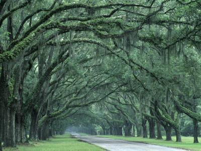 Historic Wormsloe Plantation, Savannah, Georgia, USA-Joanne Wells-Photographic Print