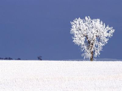 Hoar Frost Covers Tree, North Dakota, USA-Chuck Haney-Photographic Print